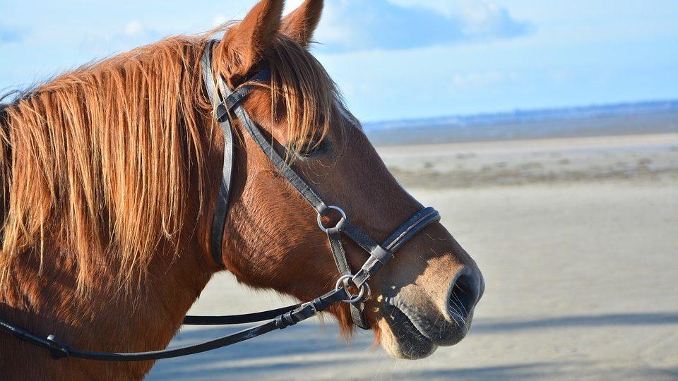 horse-2941137_960_720