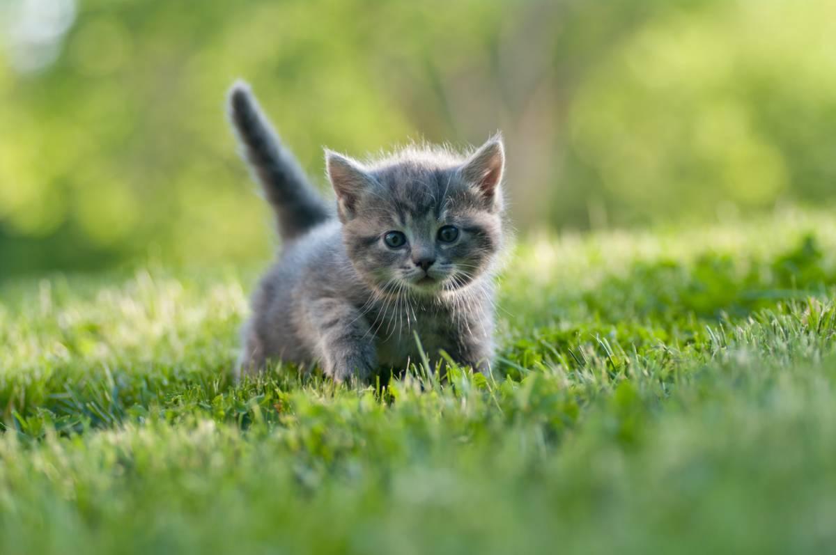 4 conseils pour préparer l'arrivée d'un chaton à la maison
